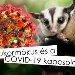 Cukormókusok és a COVID-19