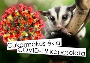 Cukormókus elkaphatja a koronavírust:?